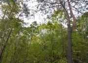 Nowa Wieś, 150 000 zł, 2.7 ha, zalesiona miniaturka 3