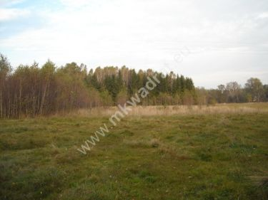 Budy-Grzybek, 3 444 000 zł, 4.05 ha, prostokątna