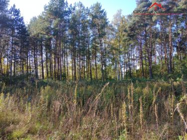 Działka przy lesie z wz w Łubiance