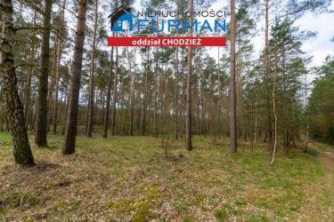 Na sprzedaż działa leśna w Tarnowie