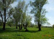 Kazimierz Dolny, 3 500 zł, 93.48 ha, bez prowizji miniaturka 16