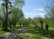 Wojszyn Stary Wojszyn, 3 500 zł, 93.48 ha, bez prowizji miniaturka 19