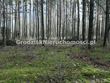 Budy-Grzybek, 130 000 zł, 11 ar, budowlana