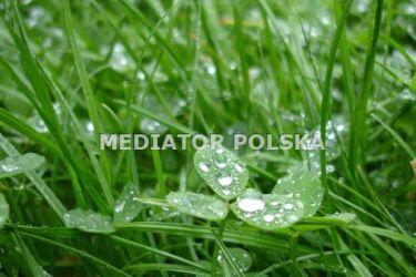 Opole Borki, 146 000 zł, 13.54 ar, budowlana