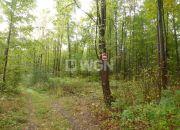 Nowa Wieś, 150 000 zł, 2.7 ha, zalesiona miniaturka 4