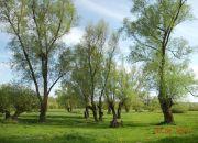 Kazimierz Dolny, 3 500 zł, 93.48 ha, bez prowizji miniaturka 12
